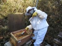 越冬用にハチミツ巣脾枠を投入!(20210109)