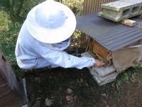 寒さ対策で巣門を狭くします(20210109)