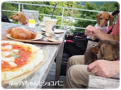 ぷー乃ちゃんとショコバニ