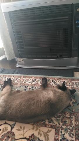 シャム猫とストーブ