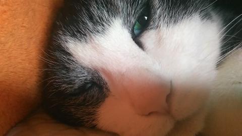 白黒はちわれ猫の白髪
