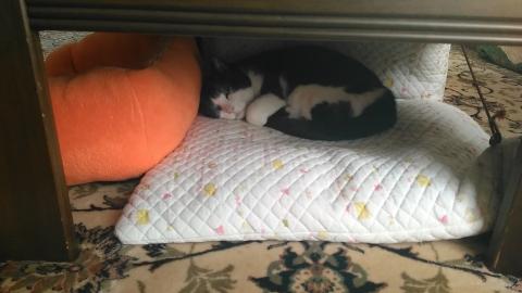 18年生きている白黒猫(18歳)