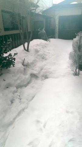 2月のお庭はまだ雪の中