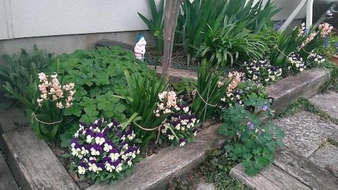 春の花壇にヒヤシンスとビオラの花
