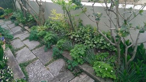 春の植え込み、下草の種類