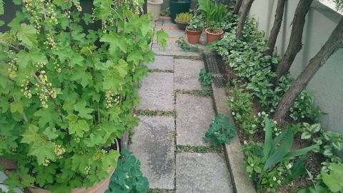 奥庭、日陰ガーデンの春の様子