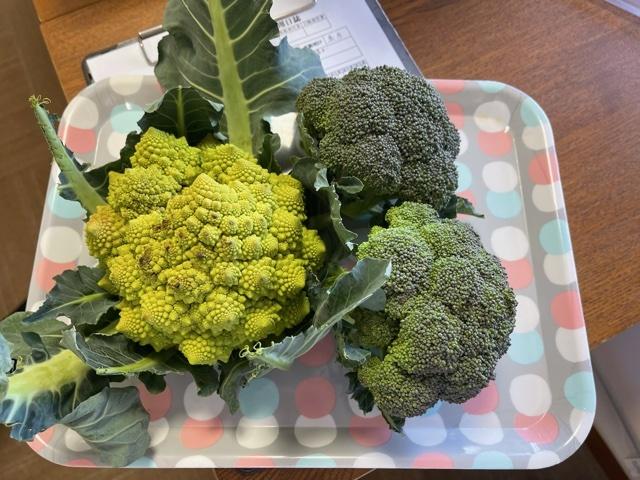 令和3年2月野菜収穫②ブログ