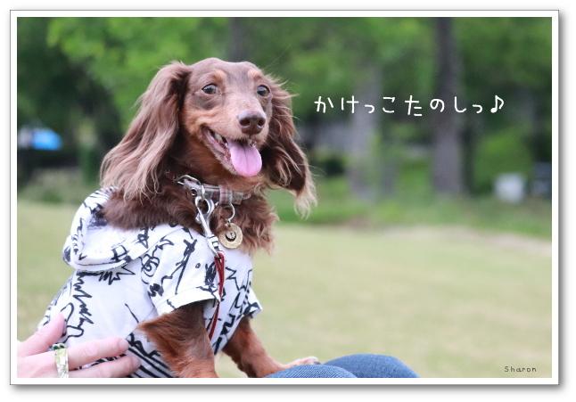 IMG_972201101122.jpg