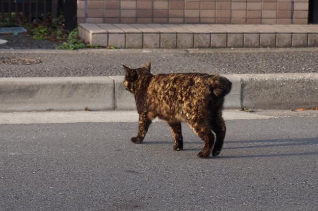 知らん顔を通したサビ猫さん