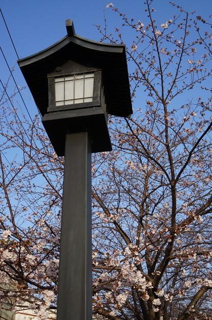 趣のある街灯と桜
