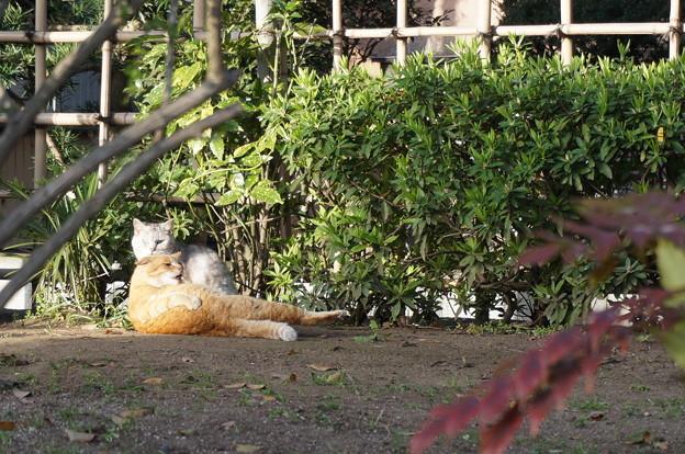 リラックスしまくりの地域猫さん
