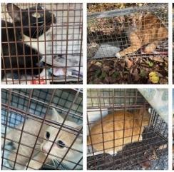cat_20210106000657e78.jpg