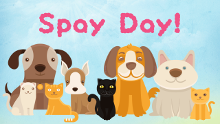 spayday-dogs-cats.png