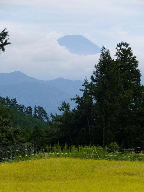 平林の棚田と富士山