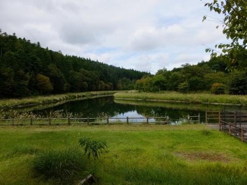平林桜池・山梨県富士川町