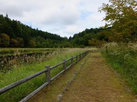 平林桜池の散策路