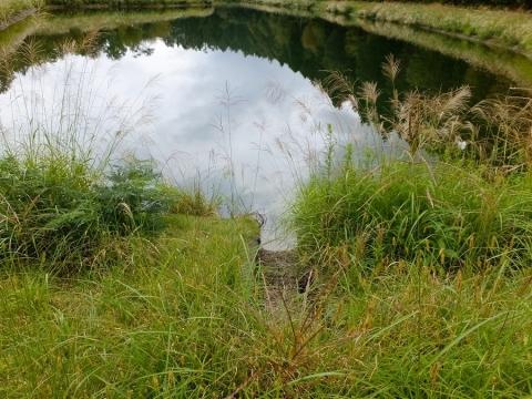 平林桜池流入渠