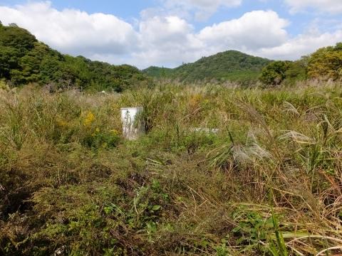 中津川のカワラノギク自生地