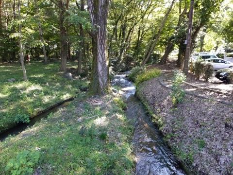 万力林を流れる小河川