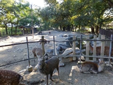 万力林(万力公園)鹿園