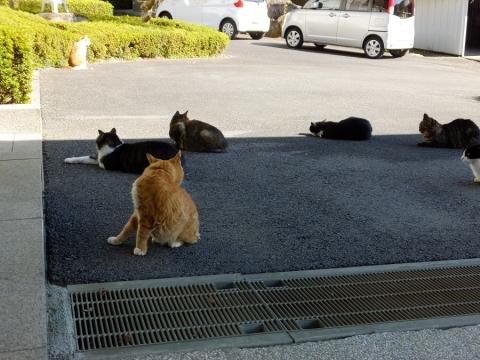 宝泉寺の猫ちゃんたち