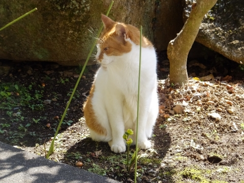 宝泉寺の猫