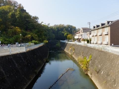 帷子川・学校橋より上流を望む