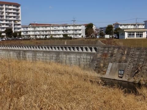 境川・鶴金橋上流の遊水地の越流堤、排水口