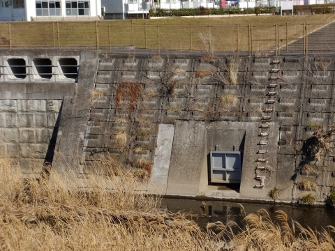 境川・鶴金橋上流の遊水地のフラップゲート排水口