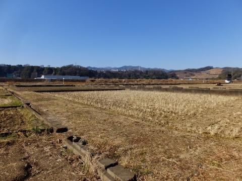 望地河原の田んぼ