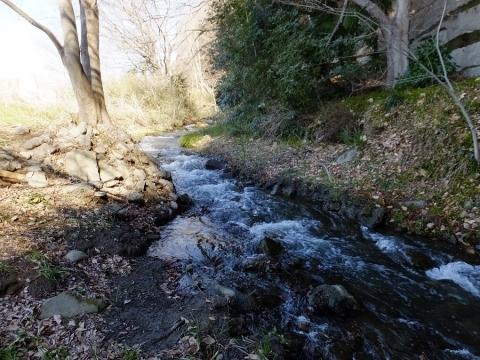 相模川に合流直前の大堀