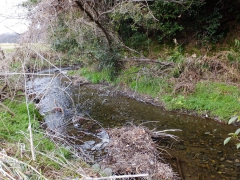 大堀の余水排水路