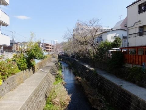 日野川・吉原橋より下流を望む