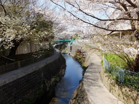 日野川・新吉原橋より上流を望む