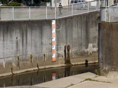 日野川取水庭の水位目盛り