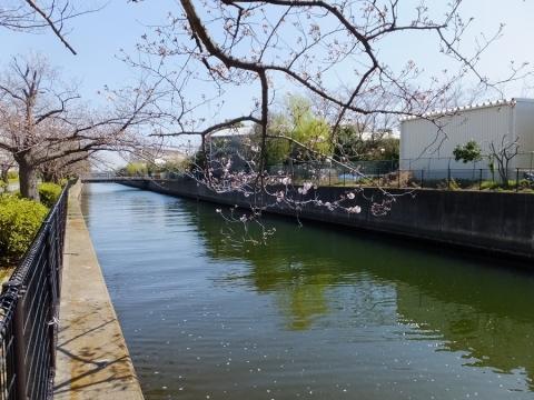 大岡川分水路