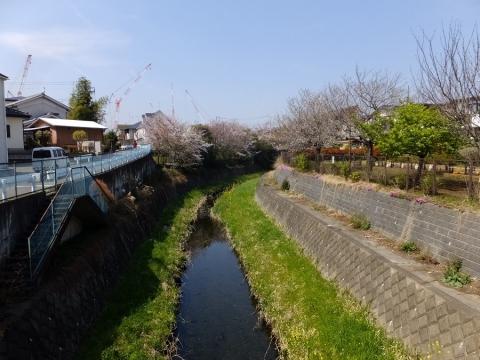 四ッ谷橋より鳩川上流の眺め