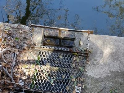鹿沼公園の鹿沼・排水口
