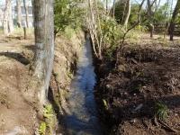 新堀用水・大けやき公園付近