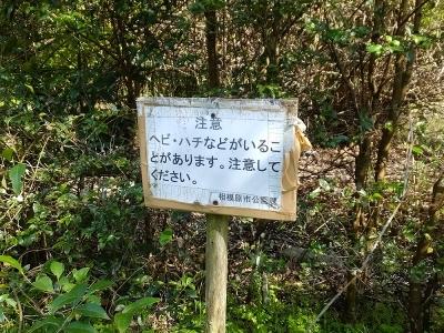 相模川自然の村・湿地帯の沼