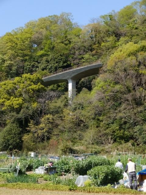 相模川の段丘崖・相模原市緑区大島