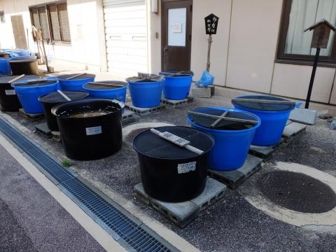 神奈川県水産技術センター 内水面試験場・メダカの水槽