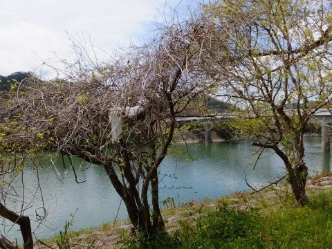 相模川・諏訪森下橋付近