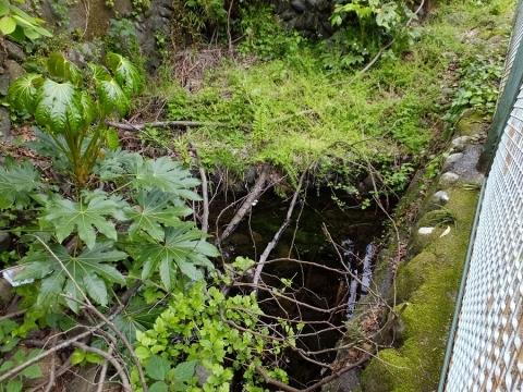 谷津川右岸の清水