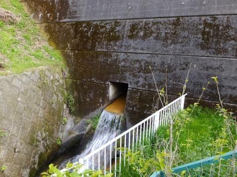 若葉台雨水調整池から流れ出る谷津川
