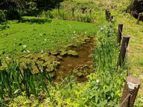 バンジ谷戸の池