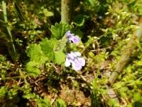バンジ谷戸の草花