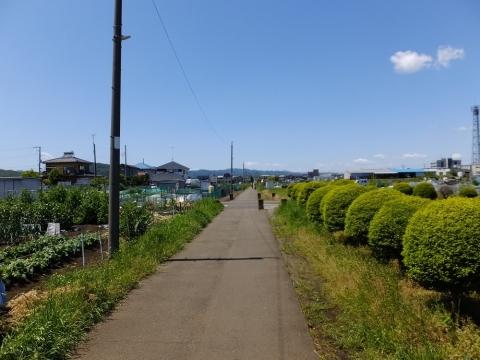 横浜水道みちの電柱