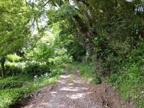 下河原川沿いの林道