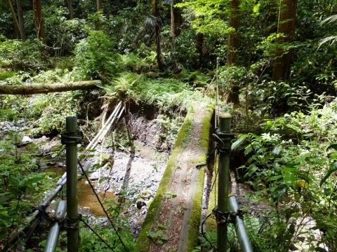 下河原川の丸太の橋